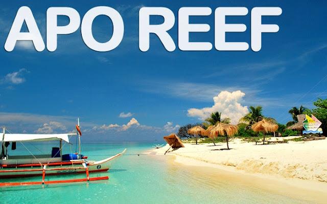 Apo Reef Tour Package