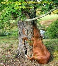 Funny comment image - Aavasyam illathathil thal idaruth - Donkey