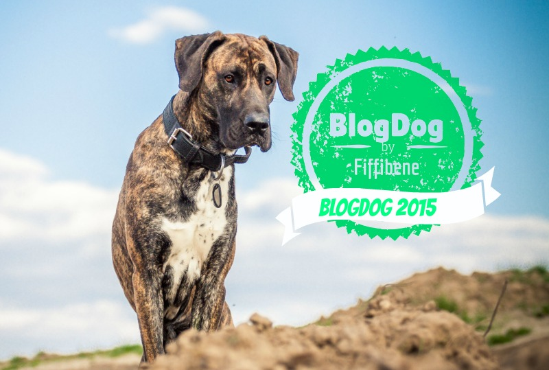 BlogDog Award 2015
