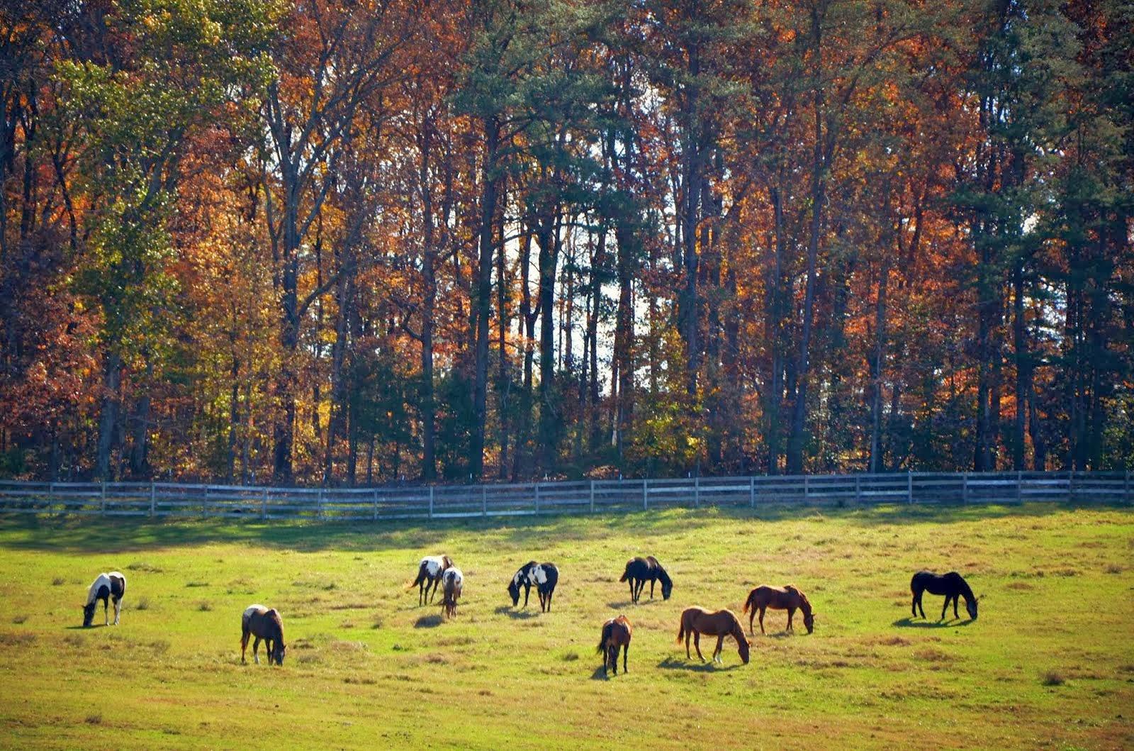 Horses Nov. 2013
