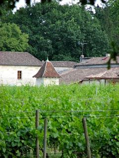 vineyard chateau dassualt