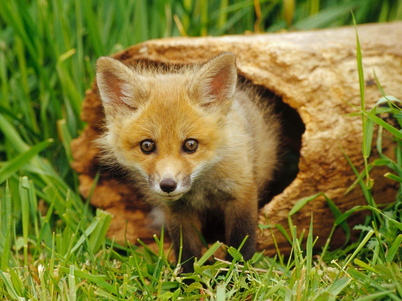 Wild animals - new animal photos
