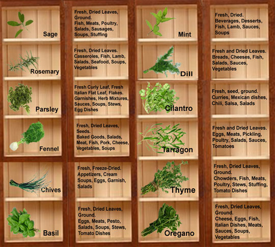Herbs and spices books download