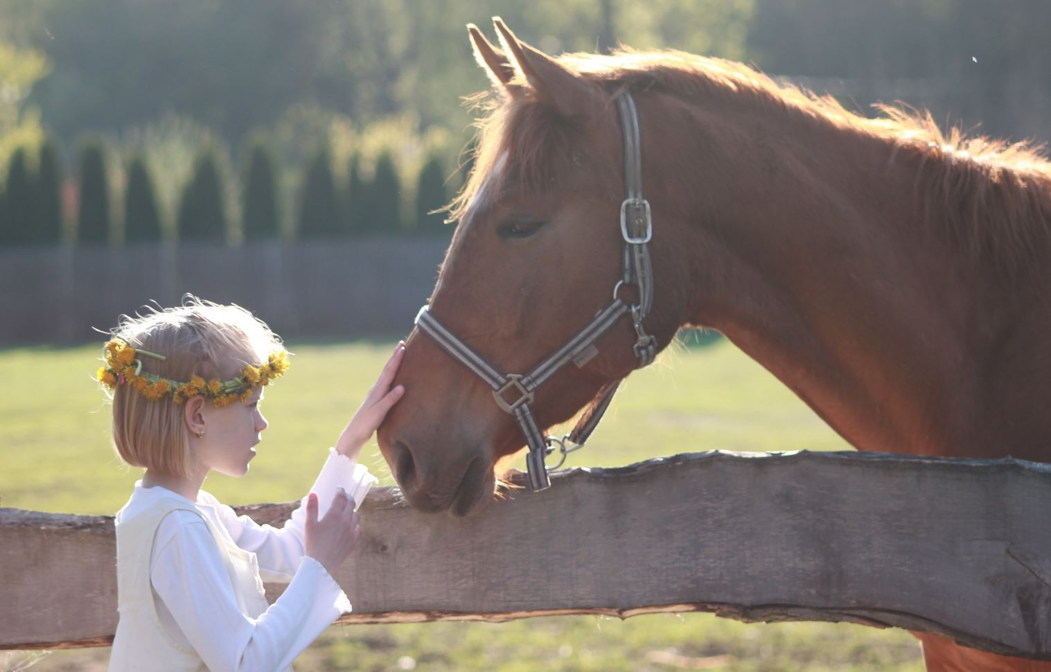 hevosen kuvat ilmaisia seksi kuvia