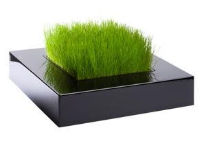 http://fabrykaform.pl/Racine_Carre_mini_ogrodek_z_oprawa_chlorophylle-p13195.html