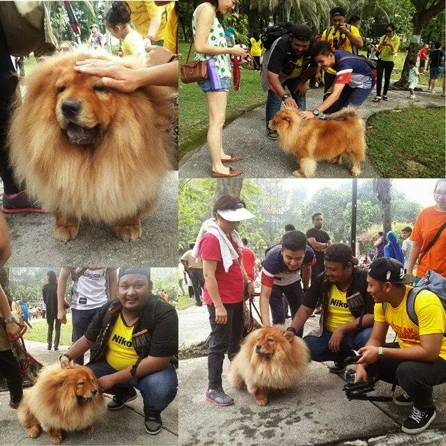 """""""I Want To Touch A Dog"""" Mengarut"""