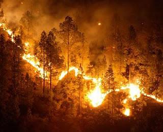 Cambio climático: Incendio de bosques.