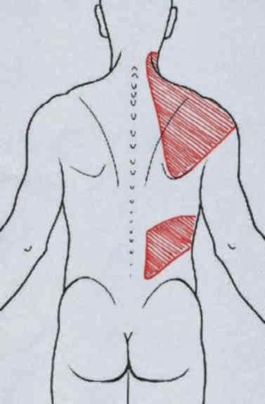 El dolor en la espalda los síntomas entre las espátulas