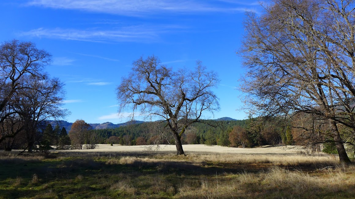 Oak trees and meadow at Joseph Stewart State Park