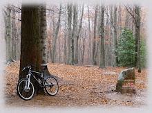 """Mi imagen,"""" frio y soledad en otoño"""""""