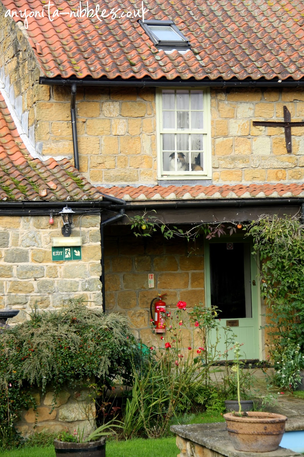 Pet friendly Ox Pasture Hall Hotel | Anyonita-nibbles.co.uk
