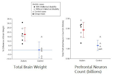 neuronsautism Il peso dellAutismo nel 2011