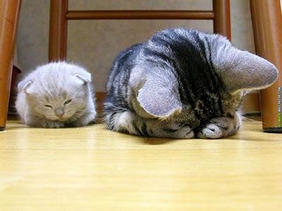 kucing comel pemalu