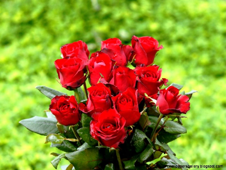 Beautiful Bunch Of Red Roses Hd  Bouquet Idea