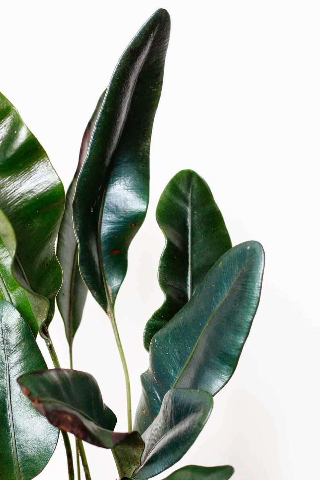 iridescent, plants, interior landscape, interiorscape, office, professional, maintenance, in situ, biophilia,  indoor, plant, garden, terrarium, elaphoglossum, metallicum