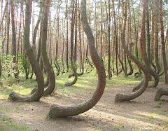 Dans une forêt de la Pologne. Personne ne peut expliquer ces formes.