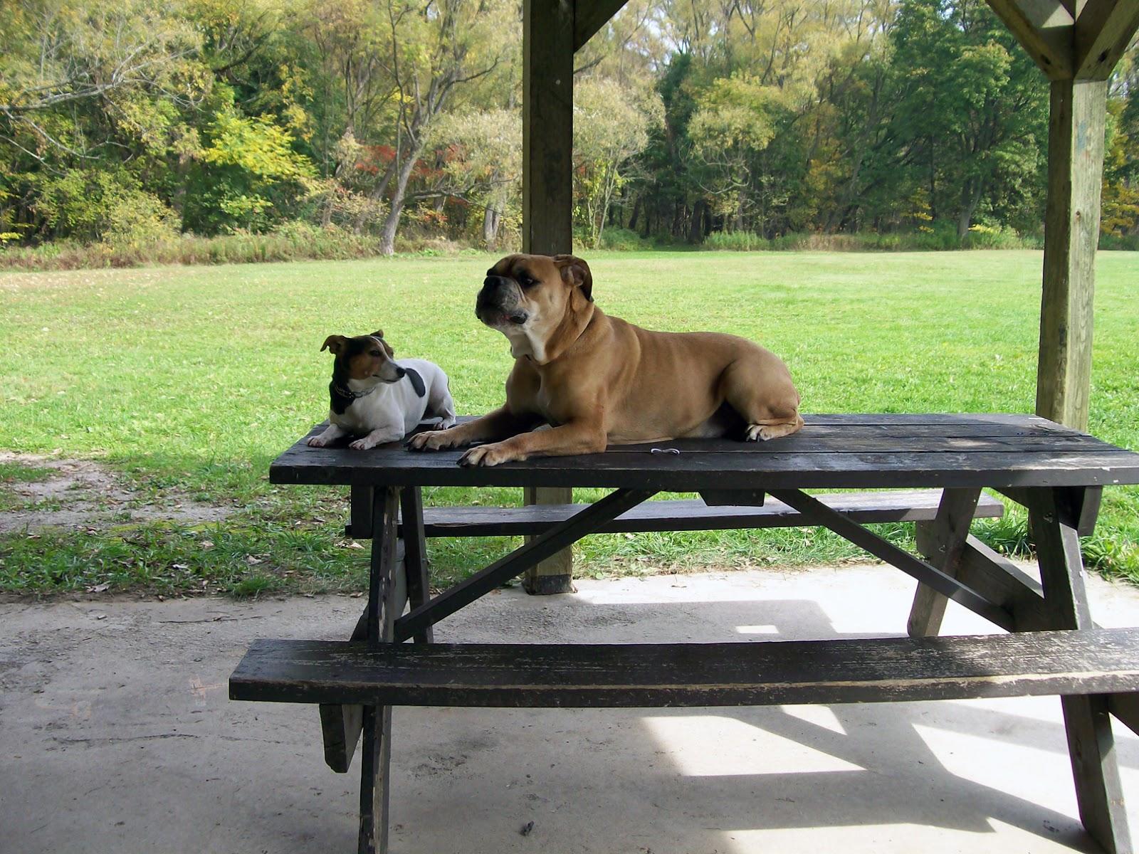 Dog Trainimg Burlington Ontario