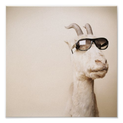 A Goat wearing Shades | A Funny Photo Print
