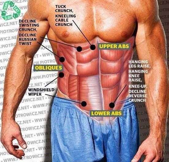 MEJORAR ABDOMINALES: Abdominales, músculos