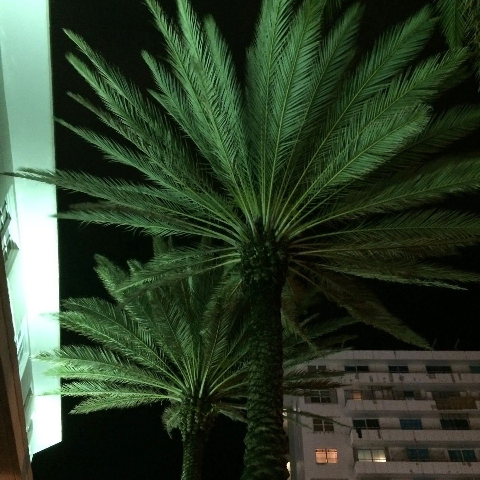 Palmiers de nuit Miami Beach pompommegirl