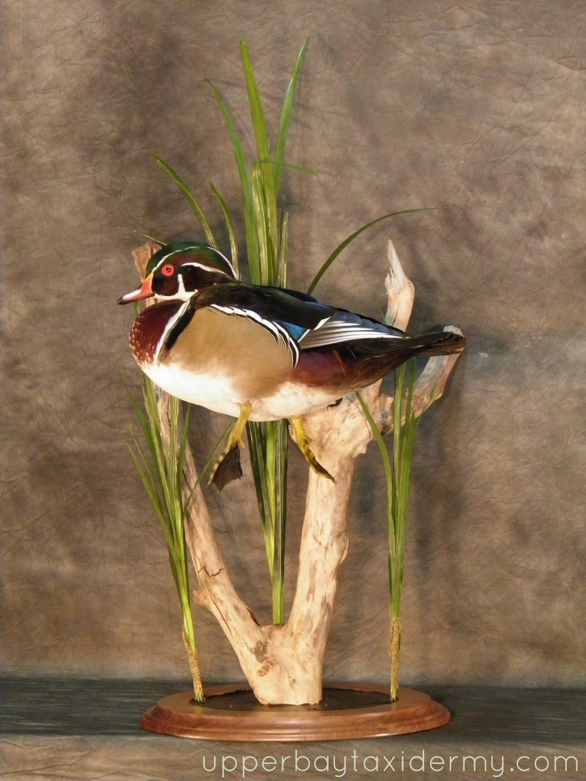 Upper Bay Taxidermy Mobile Gallery: Ducks