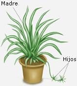 La doctora de las plantas ahorre dinero multiplicando sus - Cinta planta ...