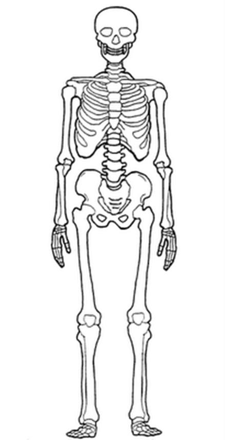 Anatomía y el cuerpo humano | DANZEO L.F.C.A Estilita Orozco