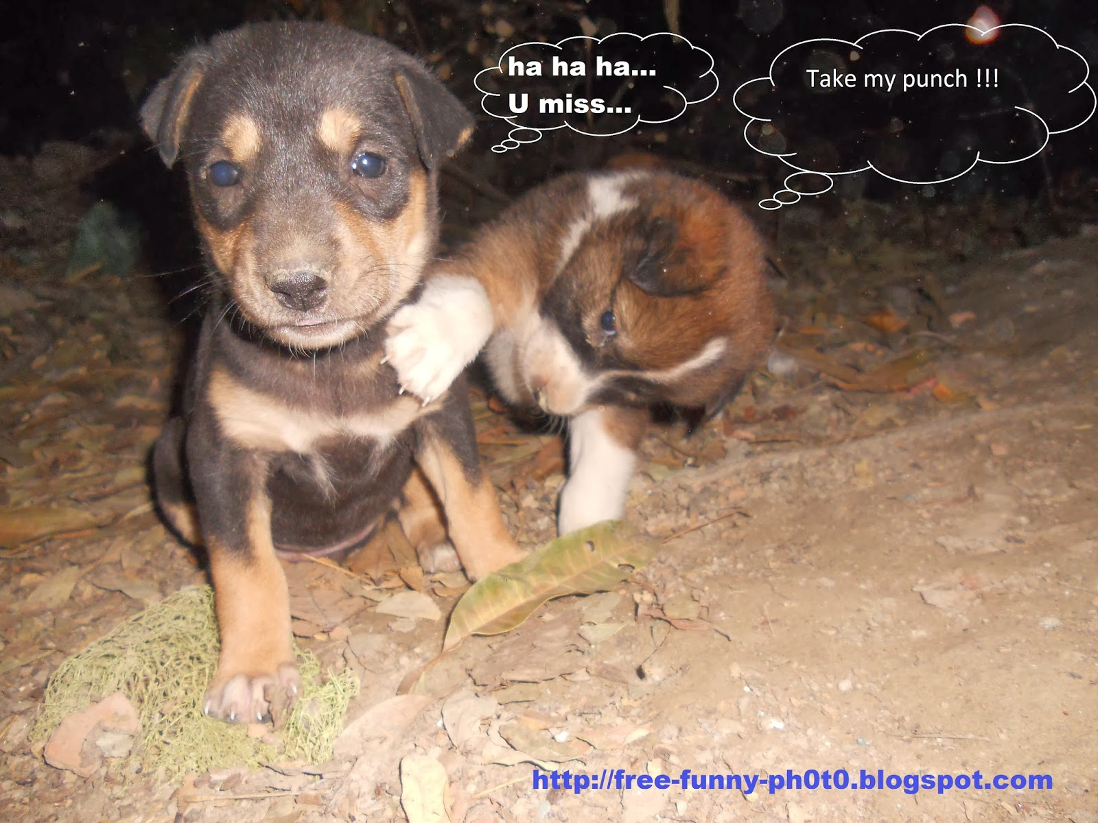 free funny photoS Cute puppies 2014