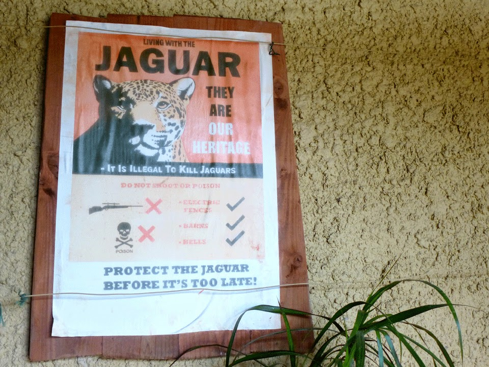 save the jaguar poster