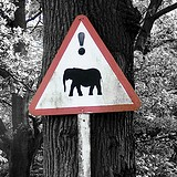'! danger elephants at Knowsley Safari Park?' by Adam Foster | Codefor on Flickr