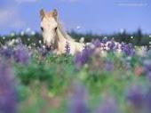 cavallo fiorito