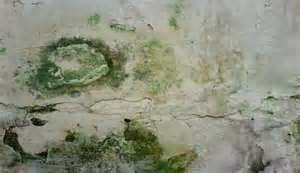 mengatasi rembesan dinding, memperbaiki tembok rembes, lantai rembes, mengatasi dinding bocor, mengatasi dinding basah