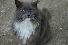 Warrior-Featheredmist-She-cat