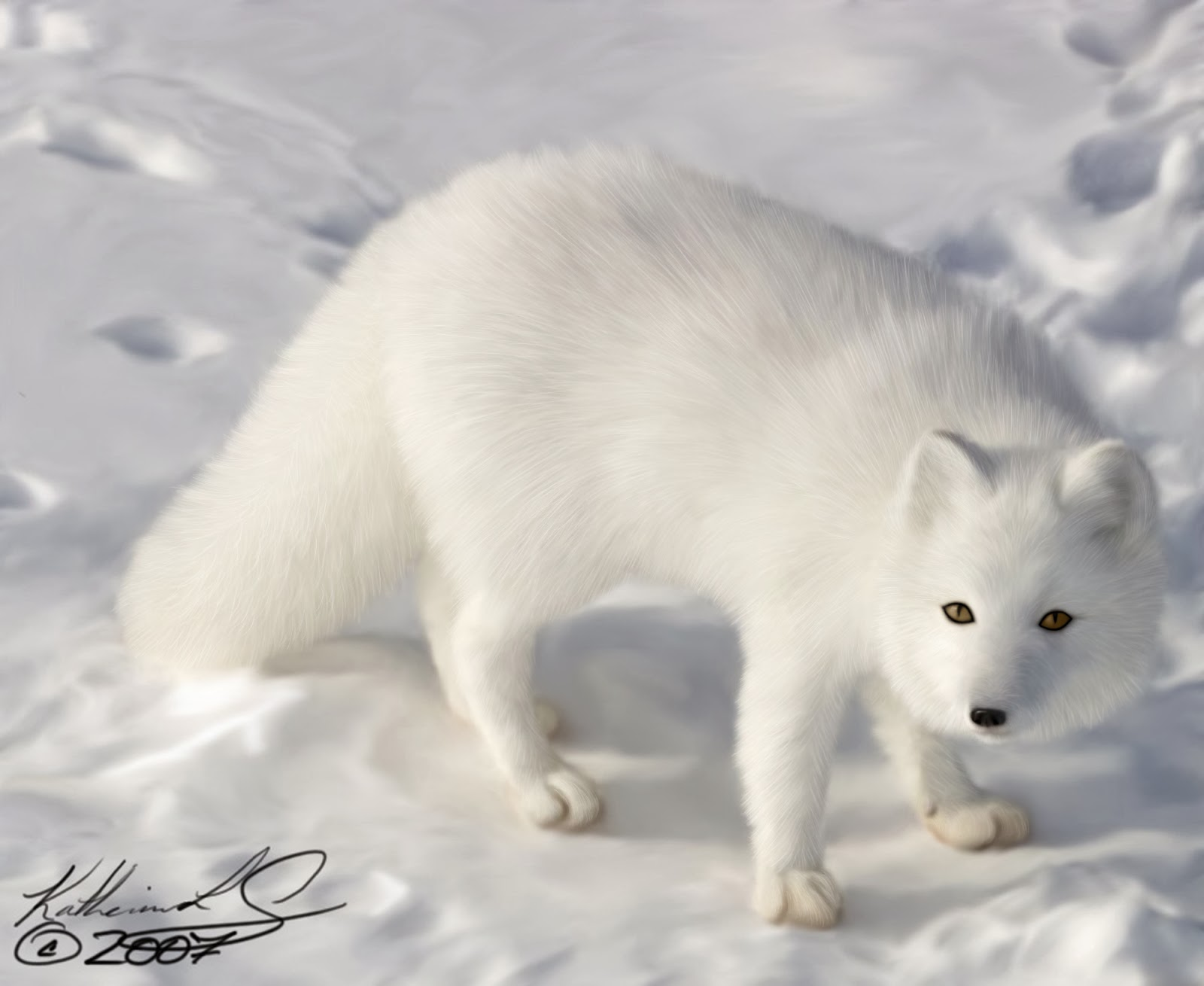 arctic fox cute white - photo #6