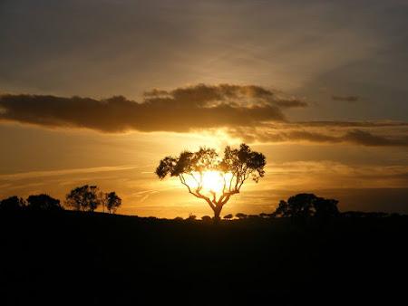 O que faz o Alentejo especial não é o Sol: É a Identidade Cultural...