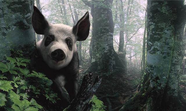 panda wallpaper, pig