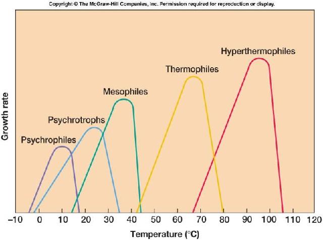 Pertumbuhan mikroba, kinetika, perhitungan, populasi, kultur, rumus