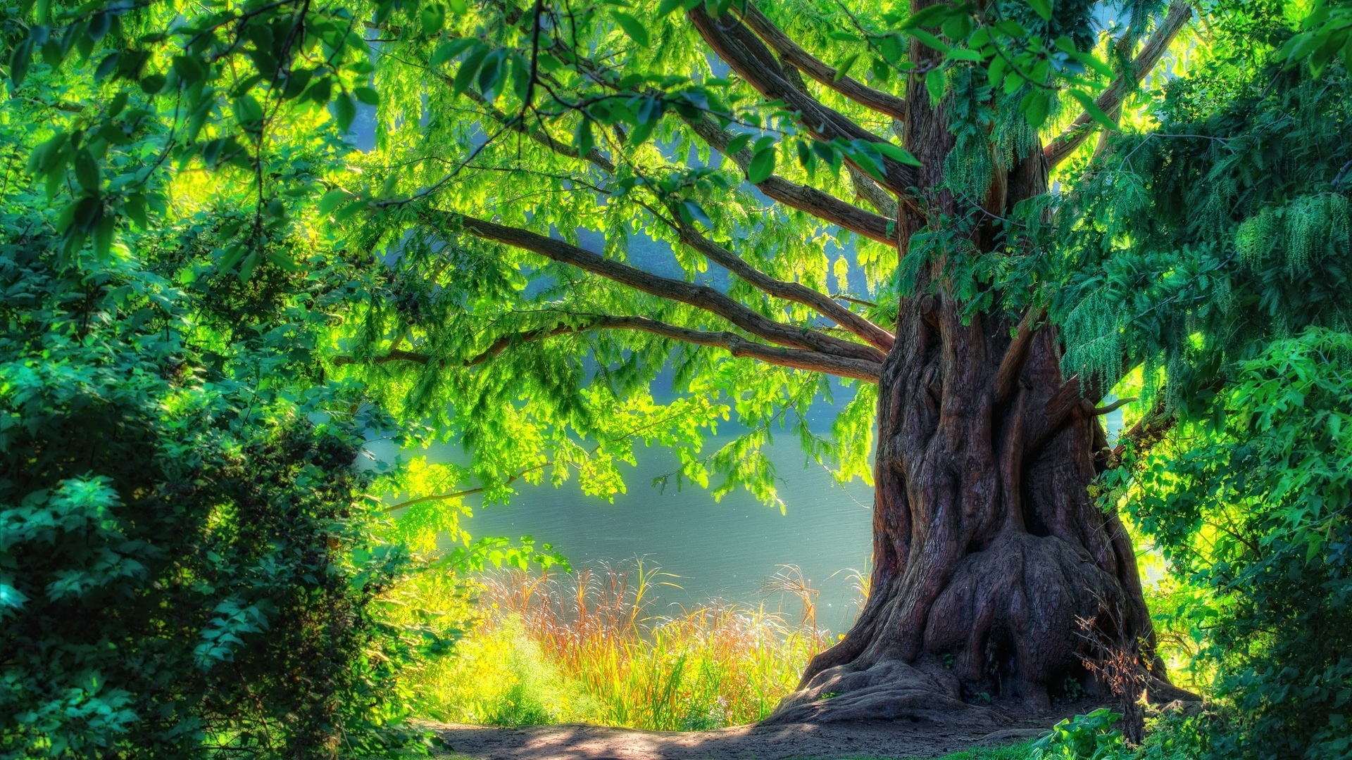 green nature background hd - photo #23