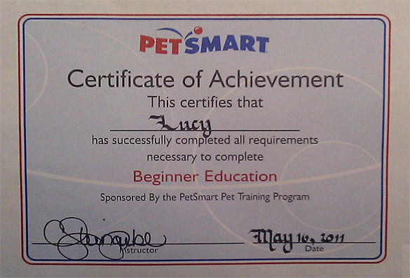 Best puppies training january 2012 for Dog certificate template