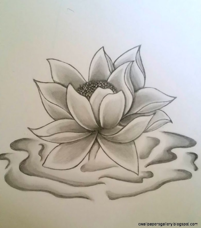 Lotus Flower Pencil Art Related Keywords  Suggestions   Lotus