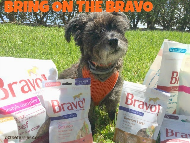 Bring on the Bravo Pet Foods raw diet for dogs