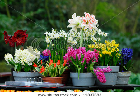 Photography blog the most beautiful garden flower for Most beautiful garden flowers