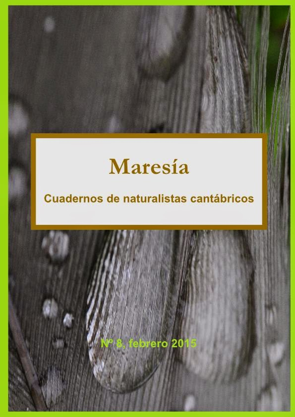 Maresía 8