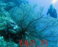 Wakatobi Cagar Biosfir Dunia Oleh UNESCO