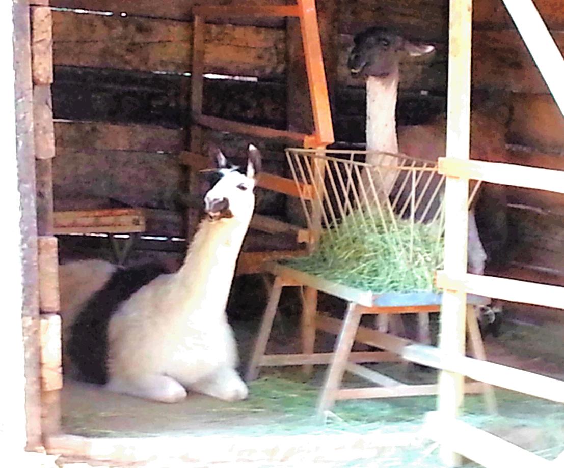 Antalya Zoo And Nature Park
