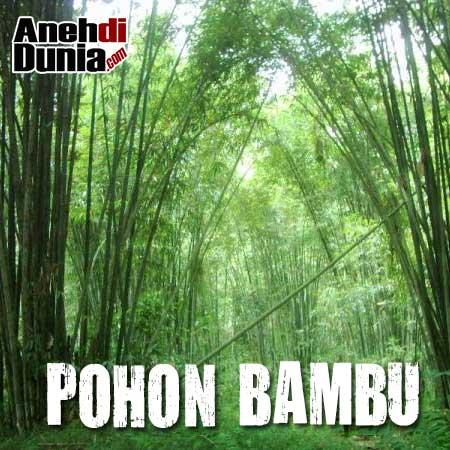 [Image: hantu-pohon-bambu.jpg]