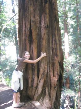 Hug a redwood