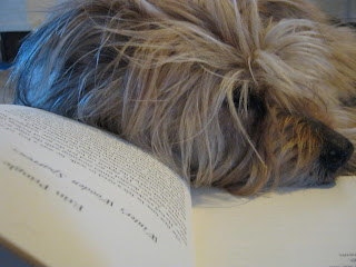 Photograph of terrier-mix laying on open book