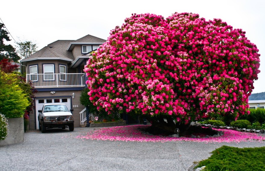 Pokok Pokok Yang Menakjubkan di Seluruh Dunia