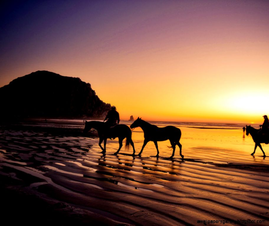 horses in the sunset on the beach wallpapers gallery
